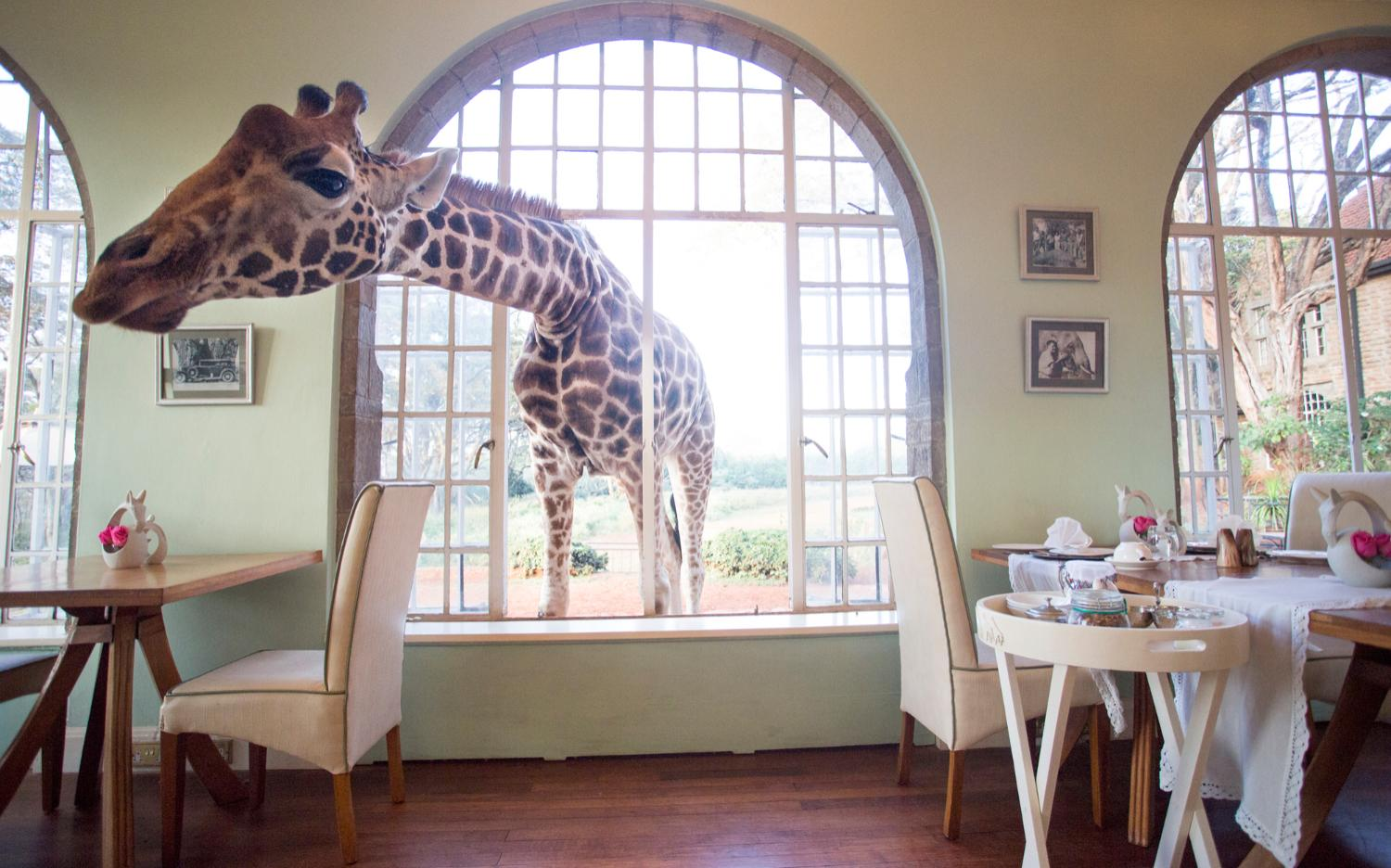 Giraffe Manor Lang'ata Nairobi – honeymoon destination